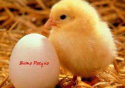 Buona Pasqua a tutti voi da Mondo Automatico
